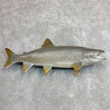 Lake Trout Freshwater Fish Mount For Sale #21868 @ The Taxidermy Store