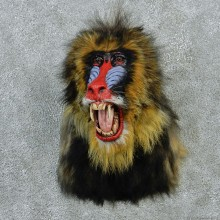 Reproduction Mandrill Baboon Taxidermy Shoulder Mount For Sale