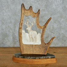 Moose Antler Mule Deer Carving #12948 For Sale @ The Taxidermy Store