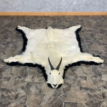 Mountain Goat Full Size Taxidermy Rug Mount For Sale