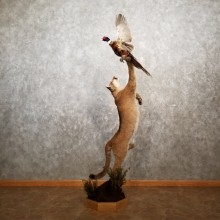 Mountain Lion Life-Size Leaping Cougar Mount For Sale #17847 @ The Taxidermy Store