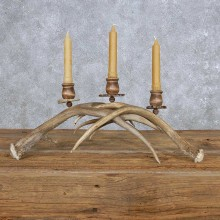 Mule Deer Antler Candle Holder Taxidermy For Sale