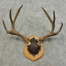 Mule Deer Antler Plaque For Sale #15989 @ The Taxidermy Store