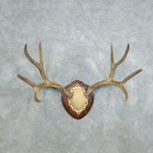 Mule Deer Antler Plaque Mount For Sale #18415 @ The Taxidermy Store