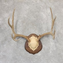 Mule Deer Antler Plaque Mount For Sale #19000 @ The Taxidermy Store