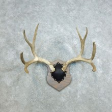 Mule Deer Taxidermy Antler Plaque #18412 For Sale @ The Taxidermy Store