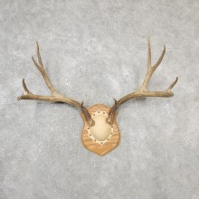 Mule Deer Taxidermy Antler Plaque #19139 For Sale @ The Taxidermy Store