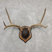 Mule Deer Taxidermy Plaque #19108 For Sale @ The Taxidermy Store