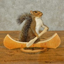 Canoe Squirrel Novelty Taxidermy Mount For Sale