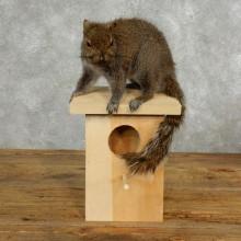 Grey Squirrel & Birdhouse Taxidermy Mount For Sale