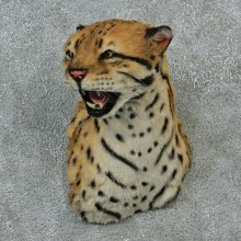 Reproduction Ocelot Taxidermy Shoulder Mount For Sale