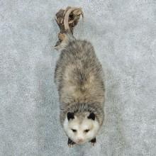 Wall Hanging Opossum