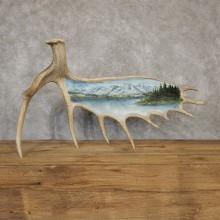 Painted Moose Antler Taxidermy Mount For Sale