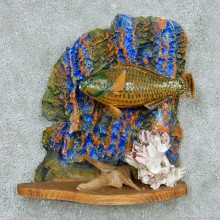 Parrot Fish Life Size Mount #13660 For Sale @ The Taxidermy Store