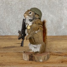 Patriot Squirrel Novelty Mount For Sale #18905 @ The Taxidermy Store