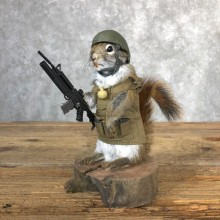 Patriot Squirrel Novelty Mount For Sale #18907 @ The Taxidermy Store