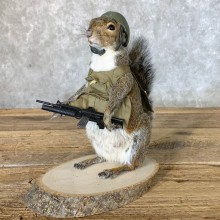 Patriot Squirrel Novelty Mount For Sale #22641 @ The Taxidermy Store