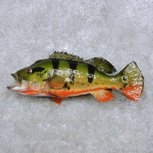 "20"" Peacock Bass Reproduction Taxidermy Mount For Sale"
