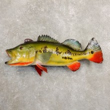 Peacock Bass Fish Mount For Sale #20848 @ The Taxidermy Store