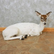 Piebald Whitetail Doe Life-Size Taxidermy Mount For Sale