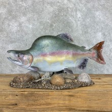 "27"" Reproduction Pink Salmon Taxidermy Fish Mount"