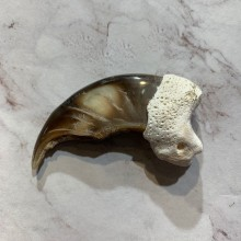 Polar Bear Claw Taxidermy For Sale #20642 - The Taxidermy Store