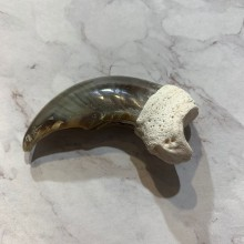 Polar Bear Claw Taxidermy For Sale #20651 - The Taxidermy Store