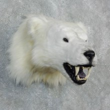 Reproduction Polar Bear Taxidermy Shoulder Mount For Sale