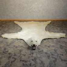 Polar Bear Taxidermy Rug #20403 For Sale @ The Taxidermy Store