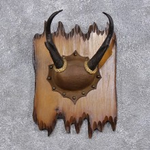 Pronghorn Antelope Horn Plaque Taxidermy Mount For Sale