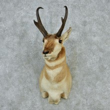 Pronghorn Taxidermy Head Mount #12854 For Sale @ The Taxidermy Store