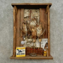 Hanging Bobwhite Quail Bird Mount For Sale #16677 @ The Taxidermy Store