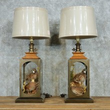 Quail Lamp Life-Size Taxidermy Bird Mount Pair #13516 For Sale @ The Taxidermy Store