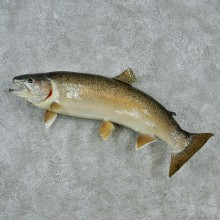 "30"" Rainbow Trout Fish Mount"