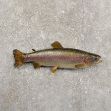 Rainbow Trout Fish Mount For Sale #19712 @ The Taxidermy Store