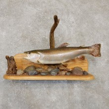 "20.50"" Rainbow Trout Taxidermy Fish Mount For Sale"
