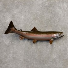 Rainbow Trout Fish Mount For Sale #20344 @ The Taxidermy Store