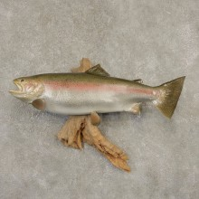Rainbow Trout Fish Mount For Sale #21600 @ The Taxidermy Store