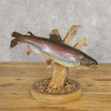 Rainbow Trout Fish Mount For Sale #22223 @ The Taxidermy Store