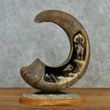Ram Horn Carving #12947 For Sale @ The Taxidermy Store