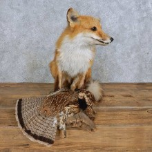 Red Fox w/ Ruffed Grouse Mount For Sale #14712 @ The Taxidermy Store