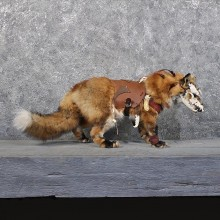 Legendermy Red Fox Standing Mount #11808 For Sale @ The Taxidermy Store