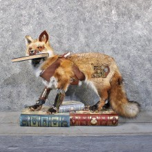 """Steampunk"" Red Fox Life-Size Taxidermy Mount For Sale"