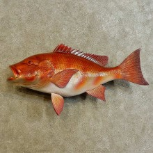 Red Snapper Replica Fish Mount For Sale #16535 @ The Taxidermy Store