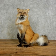Red Cross Fox Life-Size Taxidermy Mount For Sale