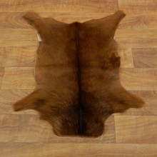 Red Duiker Hide Taxidermy Tanned Skin For Sale #17885 @ The Taxidermy Store