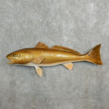 Red Fish Taxidermy Fish Mount For Sale - 17777 - The Taxidermy Store