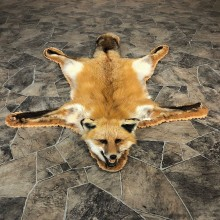 Red Fox Full Rug Taxidermy Mount For Sale