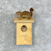 Red Squirrel & Birdhouse Taxidermy Mount For Sale