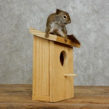 Red Squirrel & Birdhouse Mount For Sale #17202 @ The Taxidermy Store